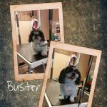 buster (2)